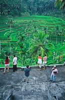 agriculture, Asia, Bali, Asia, Indonesia, palm trees, people, rice, rice fields, terraces, tourists, Tegalagang