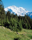 10138491, alpine, Alps, mountains, Bernese Oberland, mountain pasture, Jungfrau, scenery, coniferous forest, Switzerland, Euro