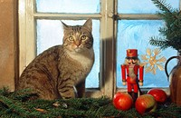 Domestic cat, christmas decoration