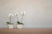 two potted orchids in front of a wall on a shelf