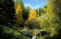 Larches in autumn, national park Hohe Tauern, Austria