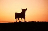 Bull silhouette, typical advertising of Spanish brandy Osborne. Navarre, Spain
