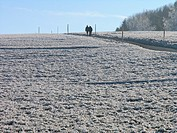 country lane, fields, hoarfrost, cold, scenery, landscape, two, persons, walk, walking, way, Winter, Switzerland, Eu