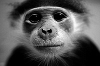 Portrait of small monkey