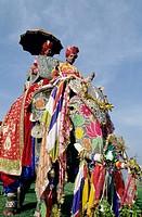 Elephant Festival. Jaipur. Rajasthan. India.