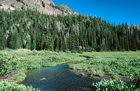 Meadow in a mid alpine terrain, with a stream amd green grasses in USA