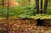 Forest of trees and foliage in fall colors