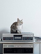 Cat sitting on a stereo (thumbnail)