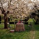 Flower,Cherry-Blossom Blossom,Prunus