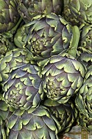 Globe artichok , Cynara scolymus , Germany , fruit food
