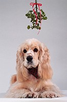 Dog Under Mistletoe