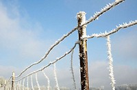A frost-covered wire fence, Harrisburg, Oregon, USA