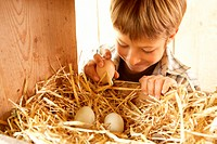 Boy (6-8) in chicken coop selecting egg, smiling, close-up