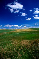 USA, South Dakota, Fort Pierre National Grassland