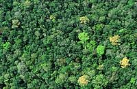 Lacandona Rain Forest