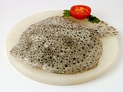 Turbot