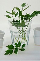 lovage in a glass