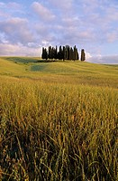 Tuscan landscape near San Quirico d´Orcia. Italy