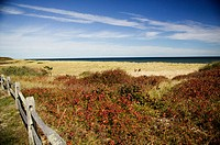 Cape Cod National Seashore. Cape Cod, Massachusetts. USA.