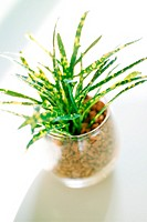 House Plant In A Glass Pot