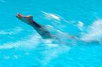 Female Swimmer Diving