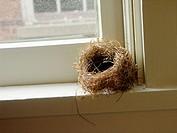 Empty Bird Nest in Window