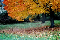 Autumn brightens a tree at a Pennsylvania park