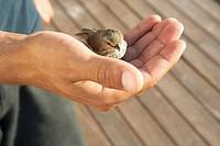 Man holding a sparrow