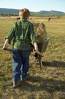Boy pushing a wheelbarrow full of hay (thumbnail)