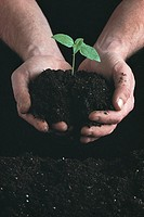 Hands holding seedling.