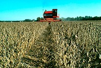 combine harvesting soy beans in MD
