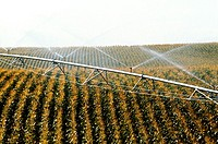 Irrigation system for corn field