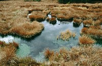 Raised bog. High moor in autumn. Weitfaller Filz. Sphagnum. National Park Sumava. Czech Republic