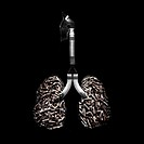 Cigarette lungs. Conceptual image of lungs filled with cigarette butts. Cigarettes contain cancer- causing chemicals and the addictive drug nicotine. ...