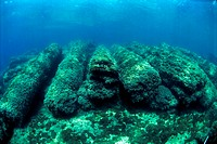 Marine archaeology. Underwater ruins covered in marine plants and animals. These are Roman columns that have been found in the harbour of Caesarea on ...