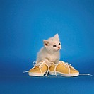 Kitten with shoes