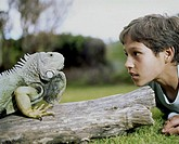 Boy (10-12) looking at green iguana on log, side view, close-up
