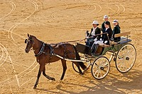 National competition of horse hitch in Fuengirola fair. Málaga province, Costa del Sol. Andalusia, Spain
