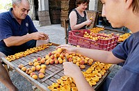 Preparing to dry apricots. Sun dried fruits. Porreres. Mallorca. Balearic Islands. Spain.