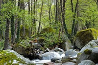 Jerte river valley. Cáceres province, Extremadura, Spain