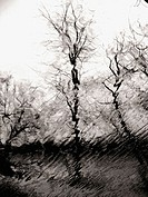 Bare trees in winter are captured thorugh a rain soaked window creating a wavy, rippled effect