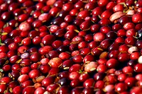 Close_up of cranberries