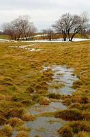 Snow melt in meadow