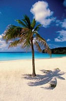 Palm tree on deserted Knip Beach on Curacao, Caribbean