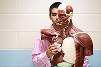 Student using anatomical model