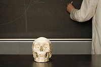 Human skull on a classroom desk