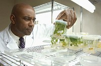 Scientist checks on plant experiment