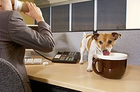 Businessman with dog in office