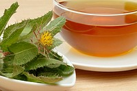 Blessed thistle (Cnicus benedictus) tea