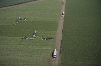 Harvesting lettuce, aerial view